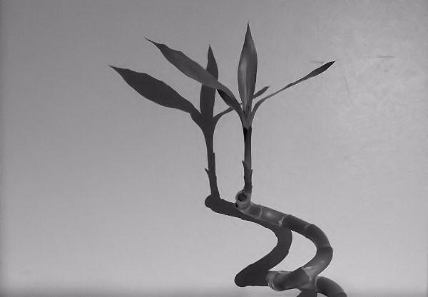 Nature morte [Essai 2005] (Photo de Didier Desmet) (10) [Artiste Infirme Moteur Cérébral] [Infirmité Motrice Cérébrale] [IMC] [Paralysie Cérébrale] [Cerebral Palsy] [Handicap]