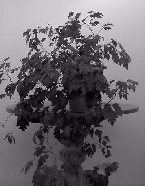 Nature morte [Essai 2005] (Photo de Didier Desmet) (9) [Artiste Infirme Moteur Cérébral] [Infirmité Motrice Cérébrale] [IMC] [Paralysie Cérébrale] [Cerebral Palsy] [Handicap]