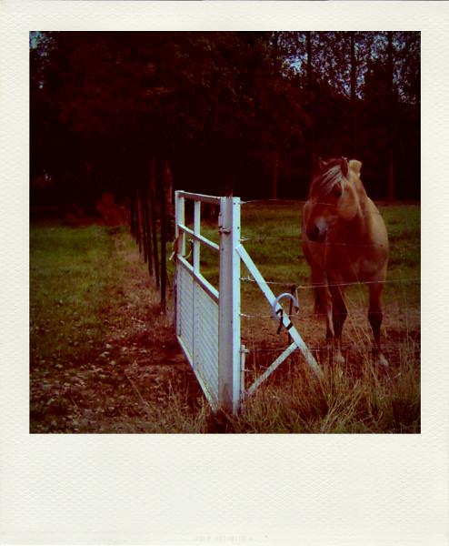 Ochancourt - Le Henson, ou cheval de la baie de Somme (Somme - 80212) [2005] (Photo de Didier Desmet) Pola [Artiste Infirme Moteur Cérébral] [Infirmité Motrice Cérébrale] [IMC] [Paralysie Cérébrale] [Cerebral Palsy] [Handicap]