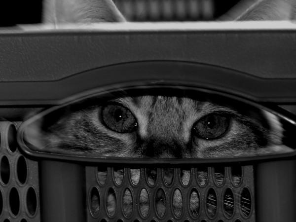 Olympia, la chatte [2019] (Photo de Didier Desmet) #1 [Artiste Infirme Moteur Cérébral] [Infirmité Motrice Cérébrale] [IMC] [Paralysie Cérébrale] [Cerebral Palsy] [Handicap] [Kawaii]
