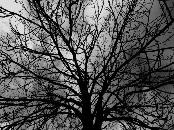 Saint-Valery-sur-Somme - Arbre - Calvaire des marins (Somme - 80230) [2016] (Photo de Didier Desmet) Noir et blanc [Artiste Infirme Moteur Cérébral] [Infirmité Motrice Cérébrale] [IMC] [Paralysie Cérébrale] [Cerebral Palsy] [Handicap]